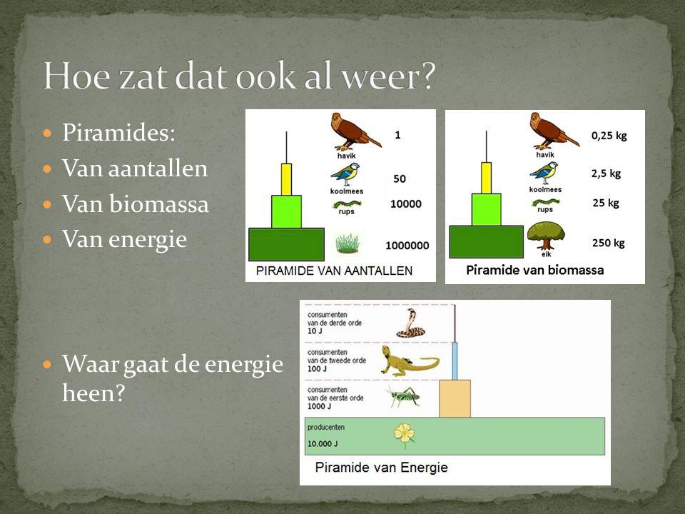 Piramides: Van aantallen Van biomassa Van energie Waar gaat de energie heen?