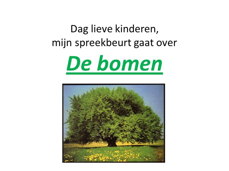Dag lieve kinderen, mijn spreekbeurt gaat over De bomen