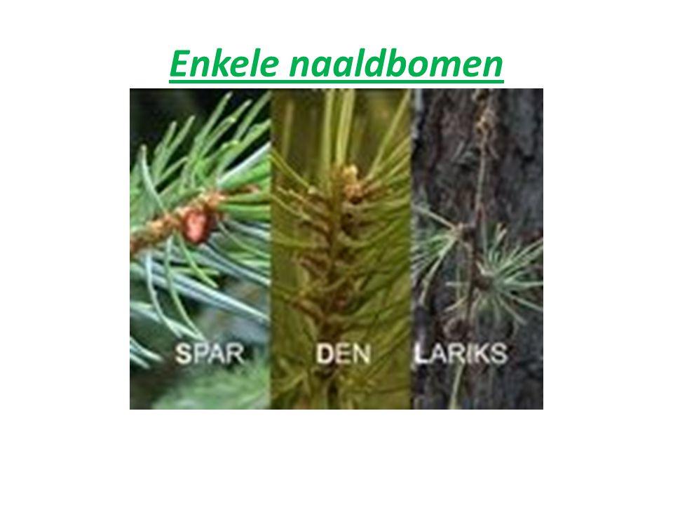 Enkele loofbomen: Plataan, wordt meer dan 30 m hoog Amerikaanse eik, wordt 18 tot 25 m hoog. Zwarte Els, wordt tot 19 m of meer hoog, hij heeft een ro