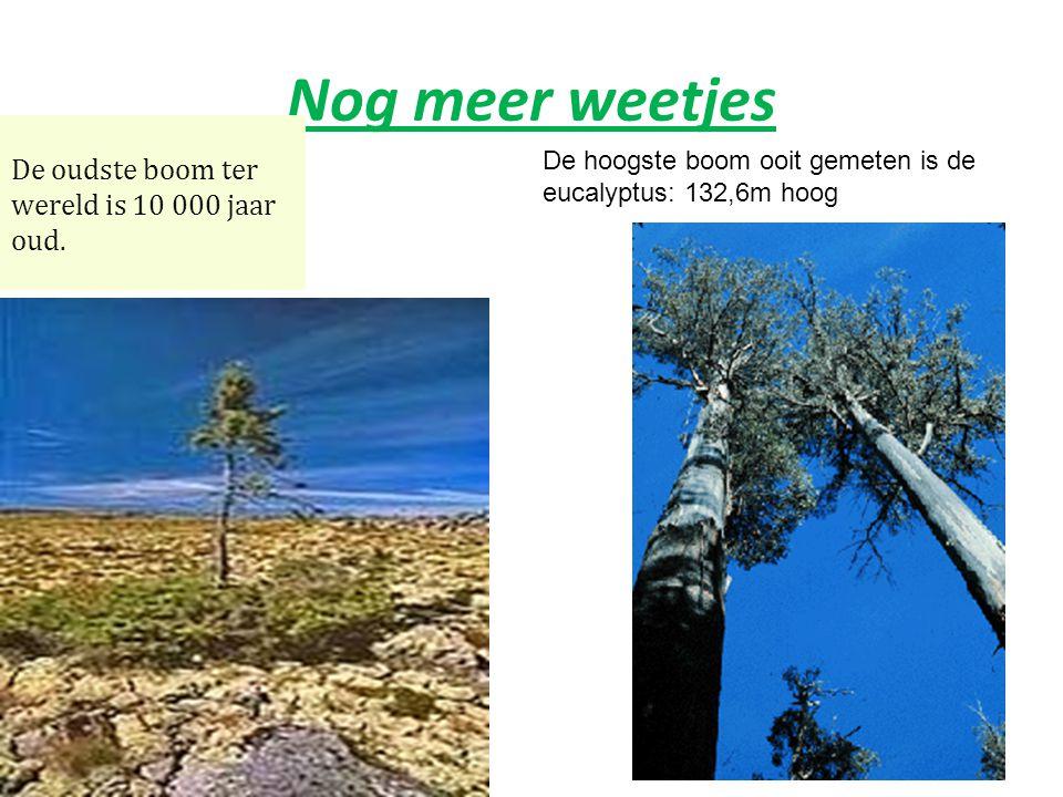 Weetjes over bomen De grootste boom : baobab De kleinste boom : de bonza ï