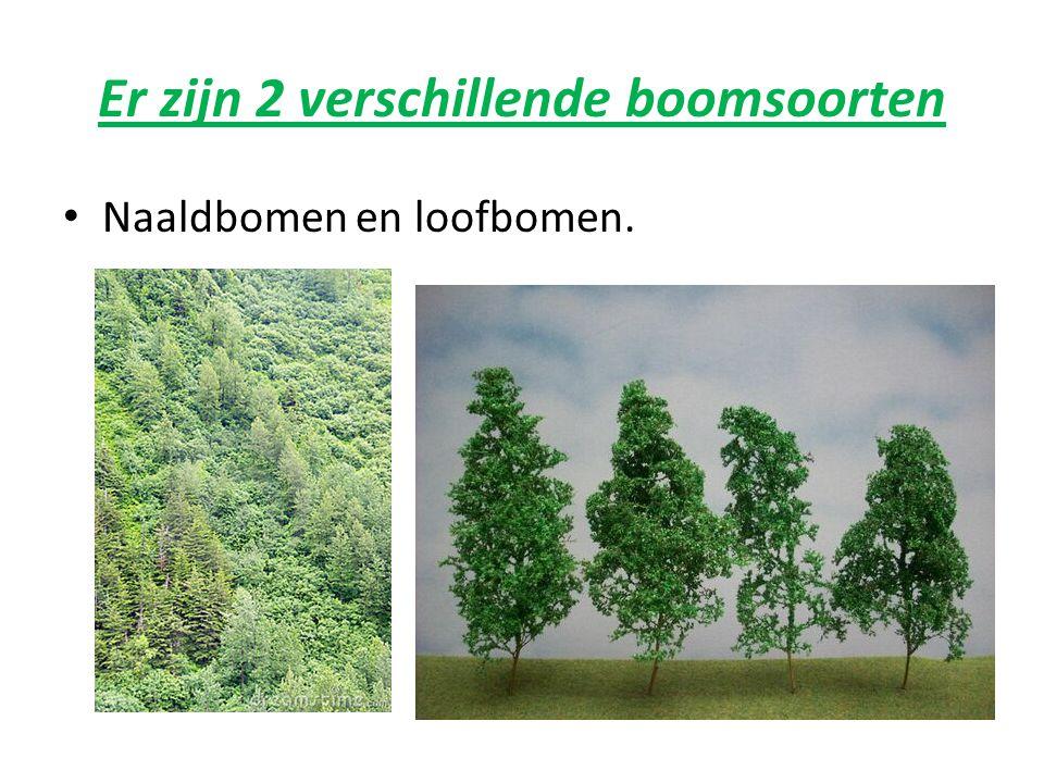 Gekke bomen