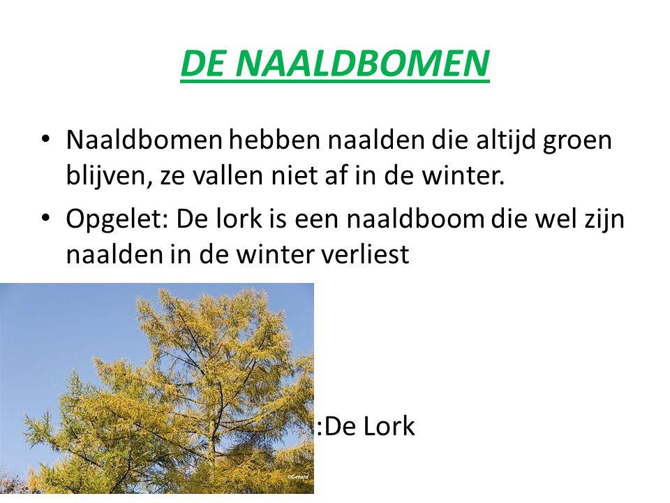 Er zijn 2 verschillende boomsoorten Naaldbomen en loofbomen.
