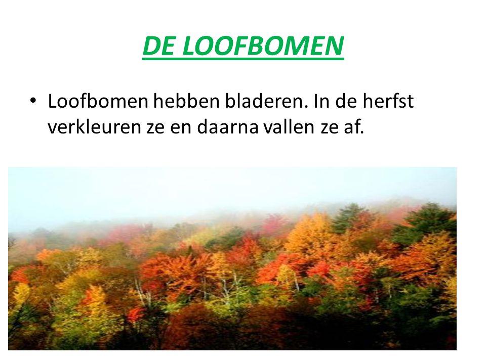 DE NAALDBOMEN Naaldbomen hebben naalden die altijd groen blijven, ze vallen niet af in de winter. Opgelet: De lork is een naaldboom die wel zijn naald