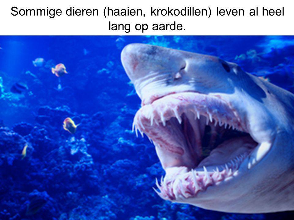 Sommige dieren (haaien, krokodillen) leven al heel lang op aarde.