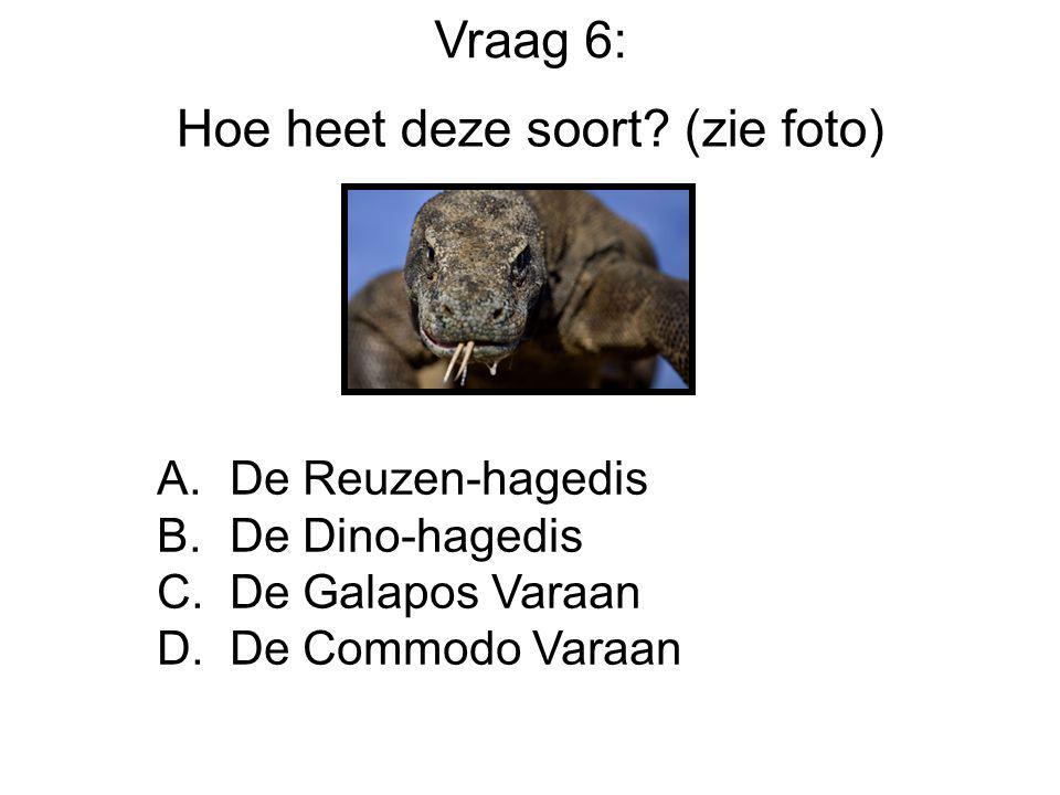 Hoe heet deze soort? (zie foto) A. De Reuzen-hagedis B. De Dino-hagedis C. De Galapos Varaan D. De Commodo Varaan Vraag 6: