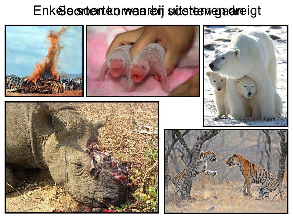 Enkele soorten waarbij uitsterven dreigt Soorten komen en soorten gaan