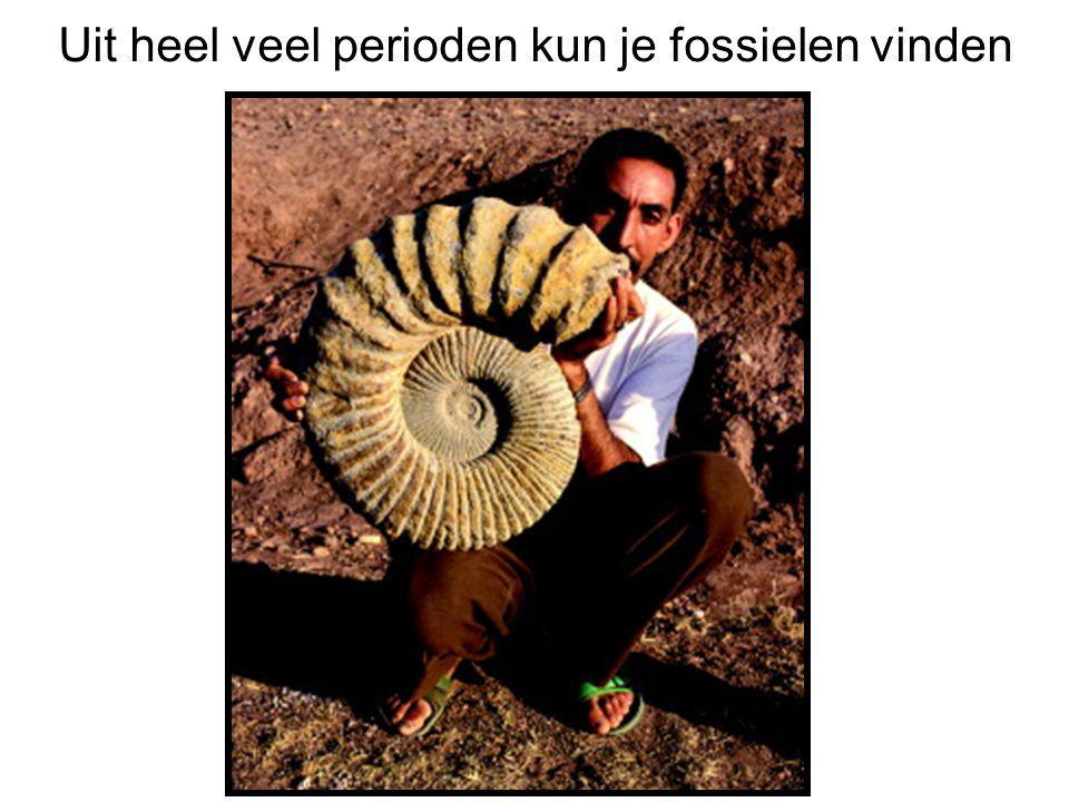 Uit heel veel perioden kun je fossielen vinden