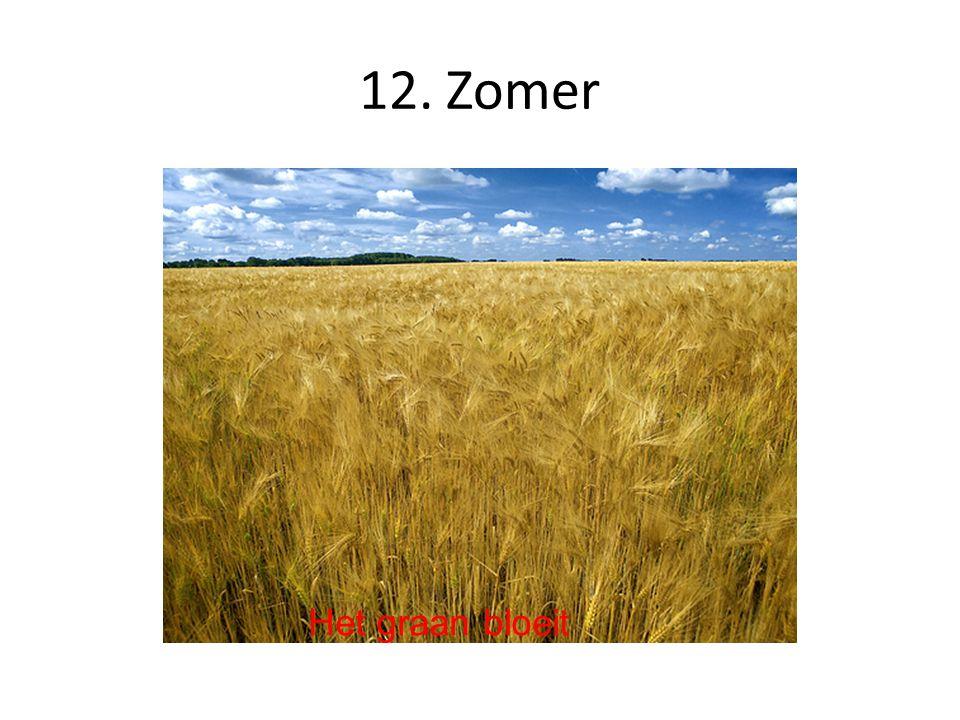 12. Zomer Het graan bloeit