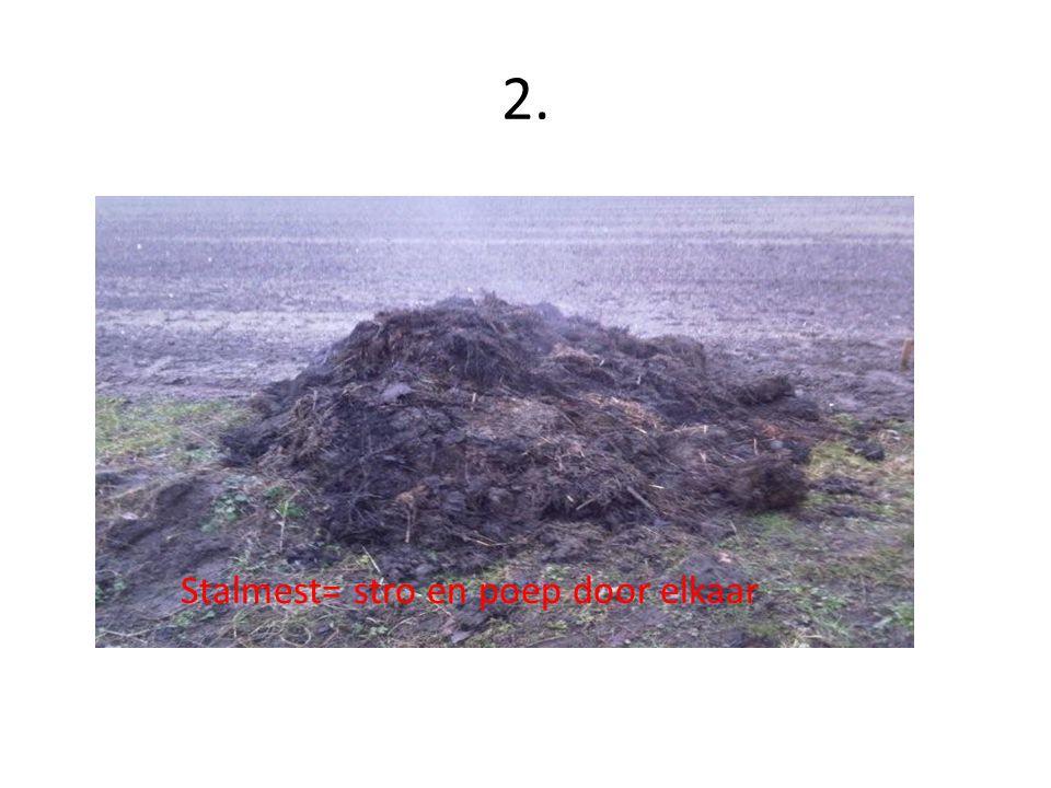 2. Stalmest= stro en poep door elkaar