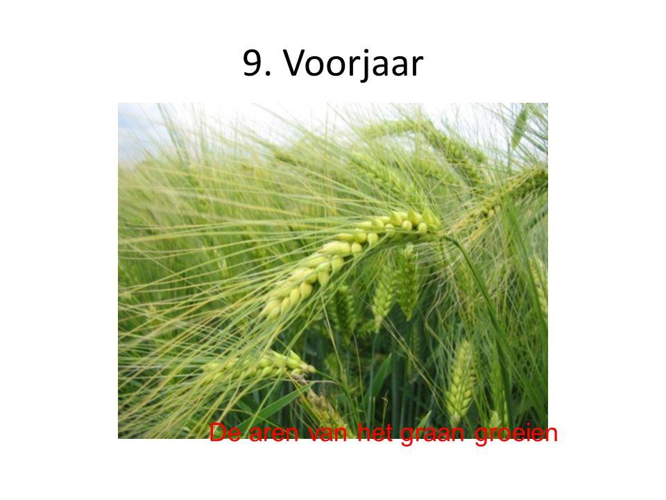 10. Voorjaar Mest Kunstmest Zorgen voor genoeg voedingsstoffen in de grond