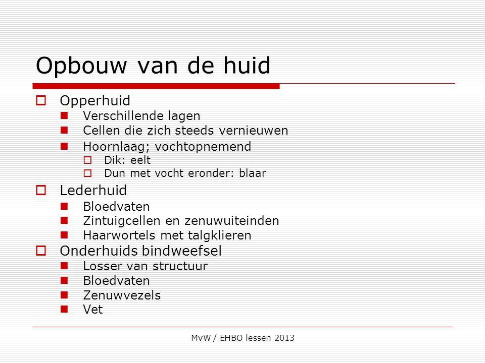 MvW / EHBO lessen 2013 Opbouw van de huid  Opperhuid Verschillende lagen Cellen die zich steeds vernieuwen Hoornlaag; vochtopnemend  Dik: eelt  Dun