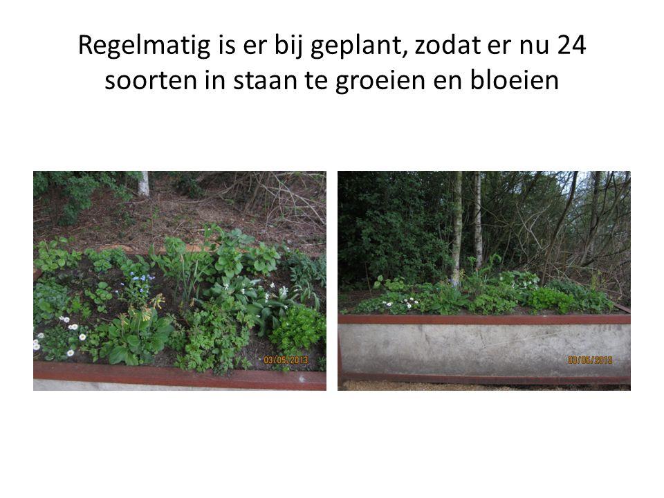 Regelmatig is er bij geplant, zodat er nu 24 soorten in staan te groeien en bloeien