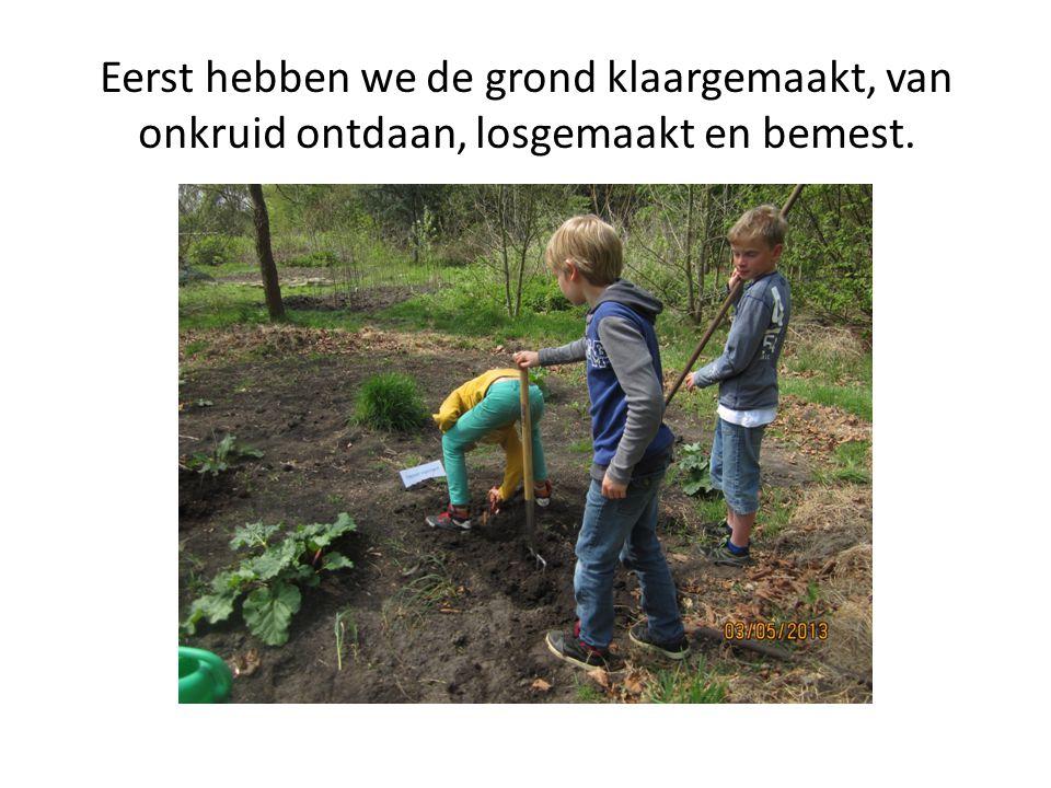Eerst hebben we de grond klaargemaakt, van onkruid ontdaan, losgemaakt en bemest.