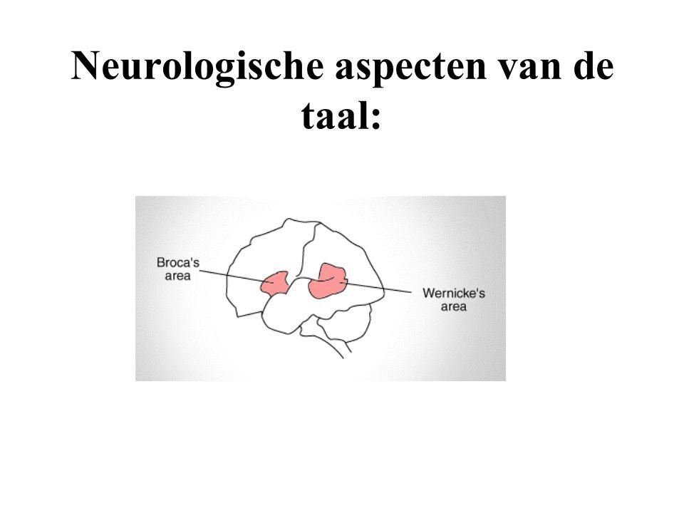 Neurologische aspecten van de taal: