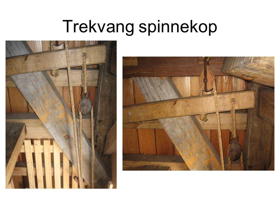 Trekvang spinnekop