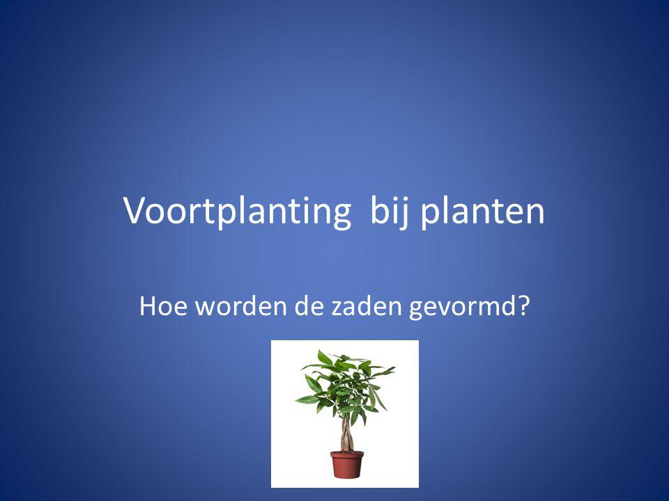 Voortplanting bij planten Hoe worden de zaden gevormd?