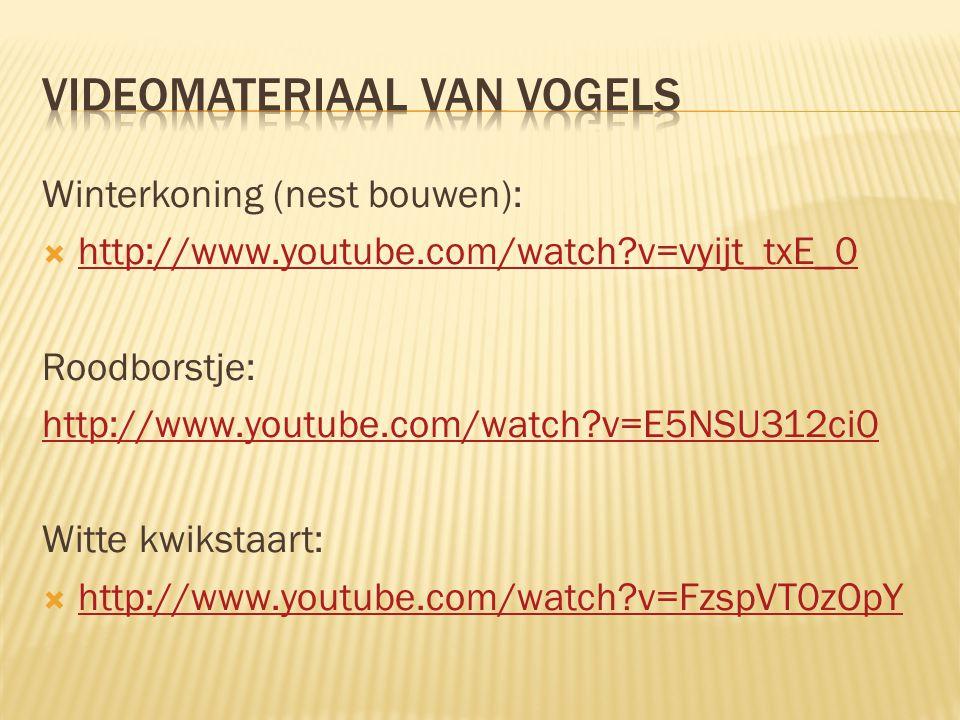 Winterkoning (nest bouwen):  http://www.youtube.com/watch?v=vyijt_txE_0 http://www.youtube.com/watch?v=vyijt_txE_0 Roodborstje: http://www.youtube.co