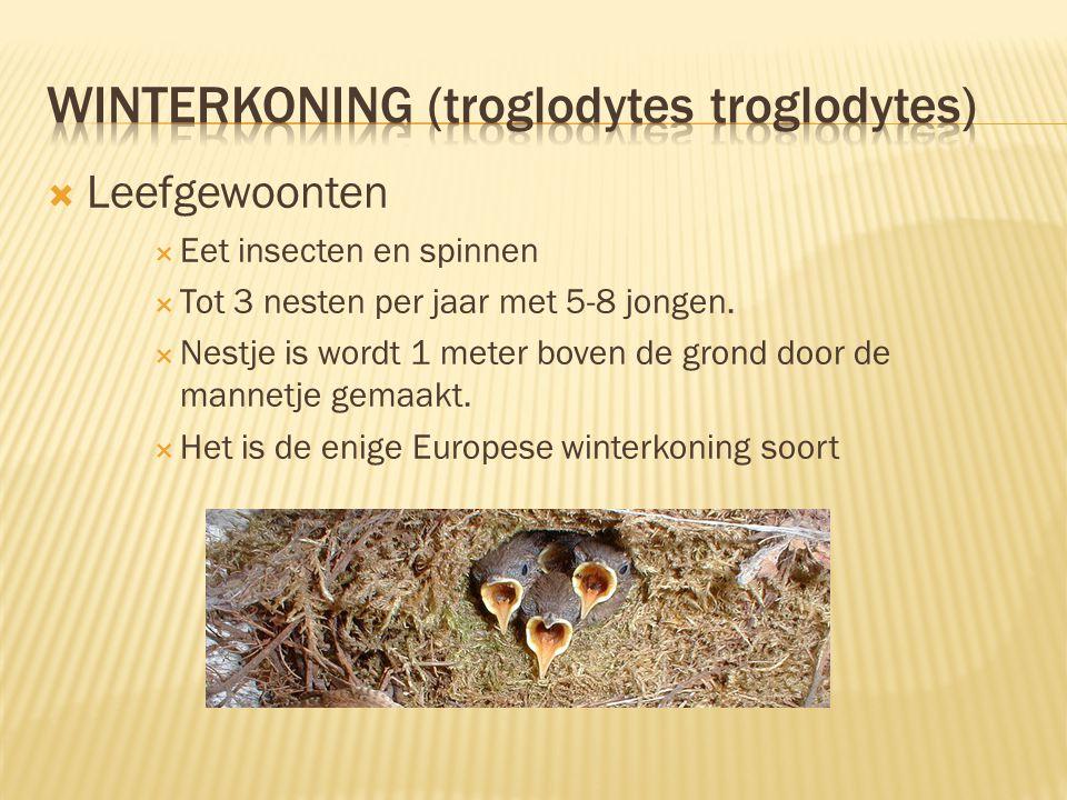  Leefgewoonten  Eet insecten en spinnen  Tot 3 nesten per jaar met 5-8 jongen.  Nestje is wordt 1 meter boven de grond door de mannetje gemaakt. 