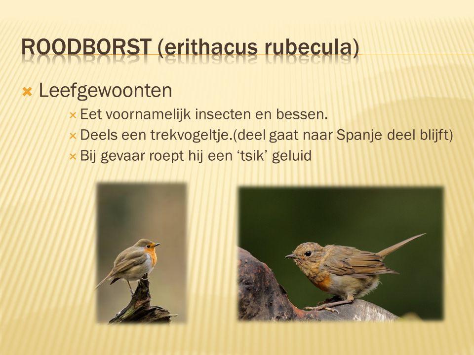  Leefgewoonten  Eet voornamelijk insecten en bessen.  Deels een trekvogeltje.(deel gaat naar Spanje deel blijft)  Bij gevaar roept hij een 'tsik'