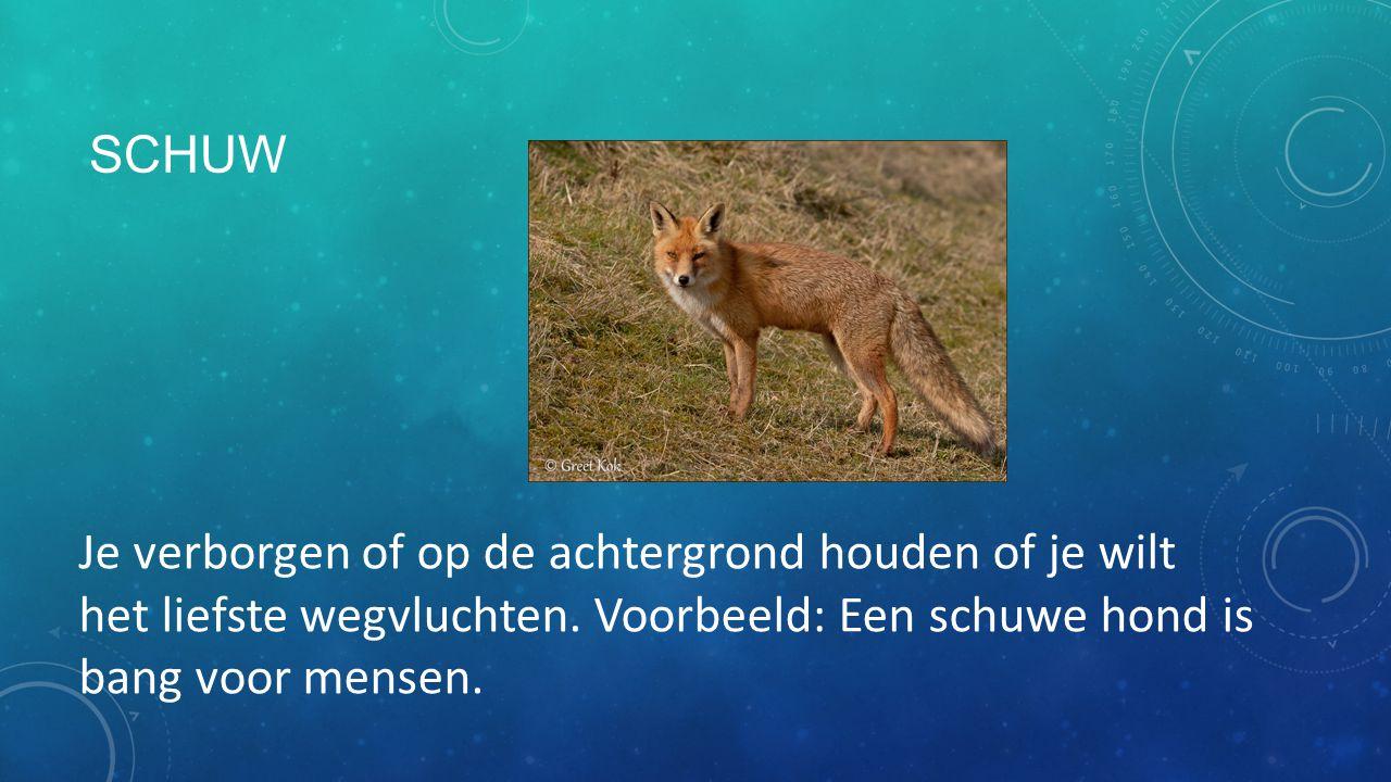 SCHUW Je verborgen of op de achtergrond houden of je wilt het liefste wegvluchten. Voorbeeld: Een schuwe hond is bang voor mensen.