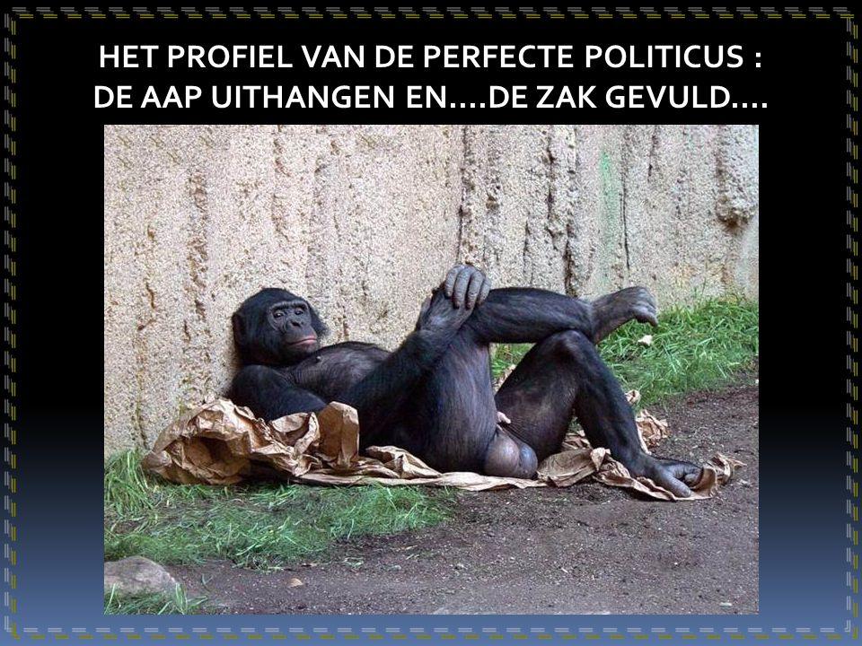 HET PROFIEL VAN DE PERFECTE POLITICUS : DE AAP UITHANGEN EN....DE ZAK GEVULD....