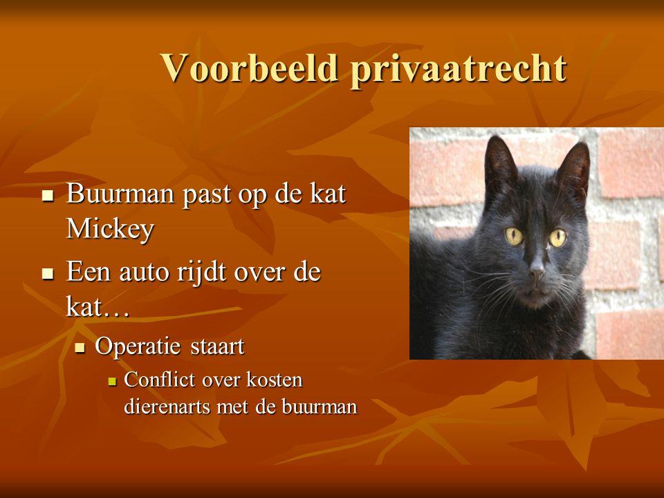 Voorbeeld privaatrecht Buurman past op de kat Mickey Buurman past op de kat Mickey Een auto rijdt over de kat… Een auto rijdt over de kat… Operatie st