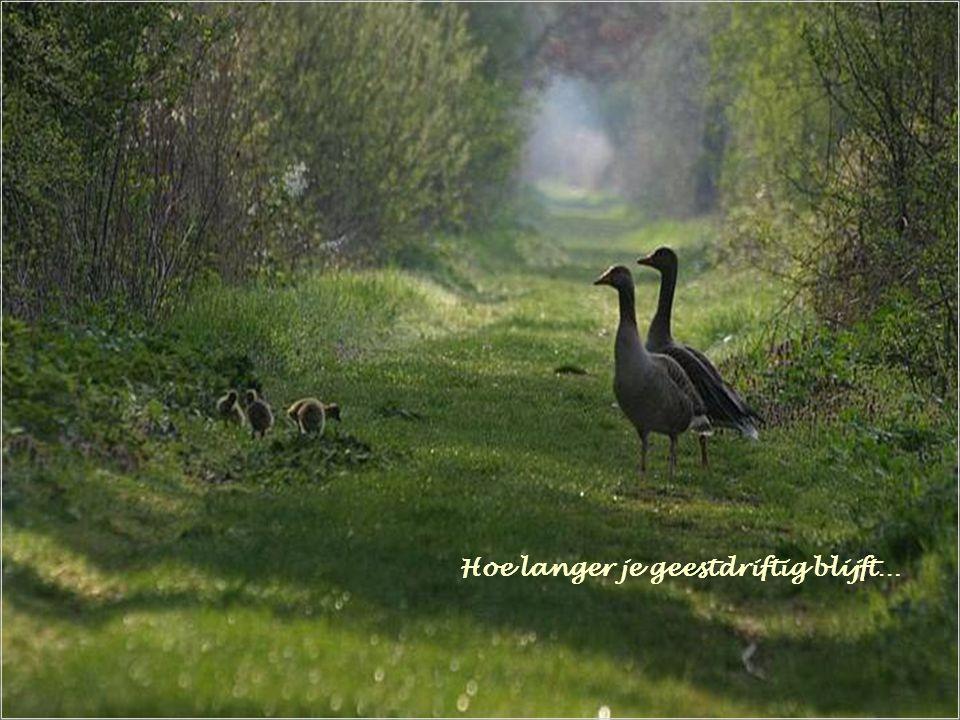 … voor anderen een vruchtbare en gelukkige oogsttijd!