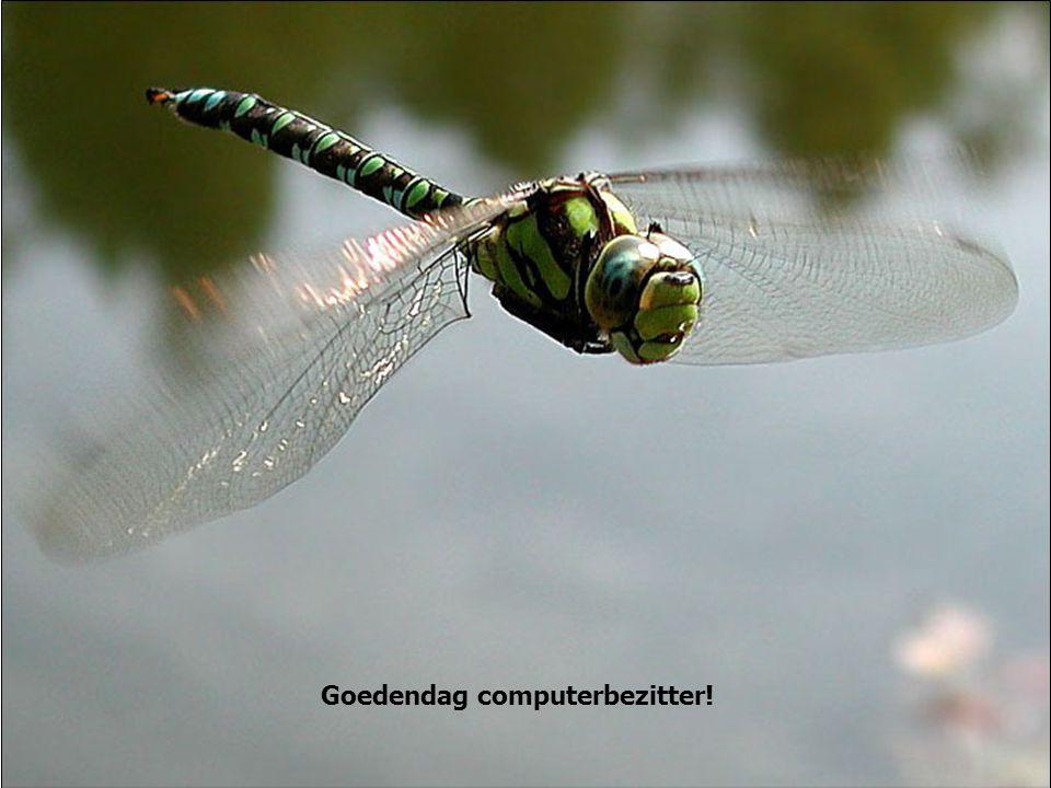 Goedendag computerbezitter!