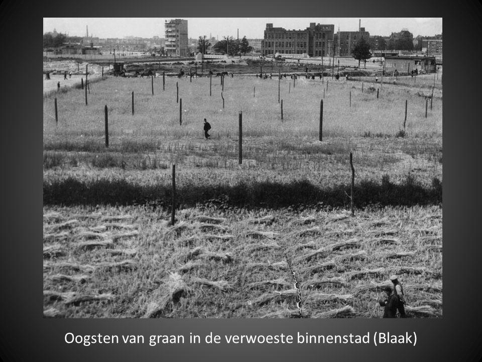 Oogsten van graan in de verwoeste binnenstad (Blaak)