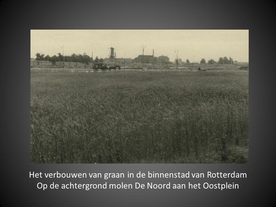 Het verbouwen van graan in de binnenstad van Rotterdam Op de achtergrond molen De Noord aan het Oostplein