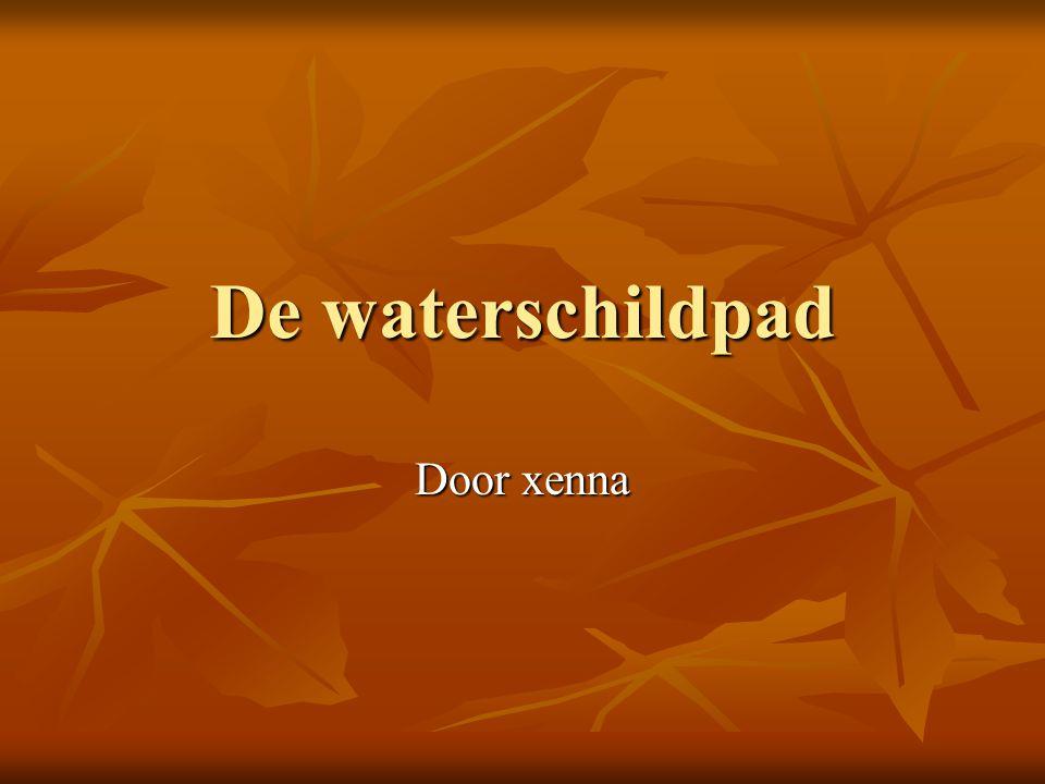 De waterschildpad Door xenna