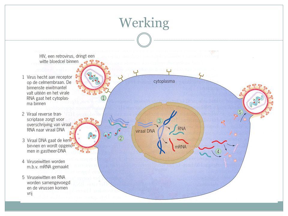 Gevolg HIV Patiënt sterft aan secundaire infectie  Long-, darmontsteking, dementie  Kaposi sarcoom (huidtumor?