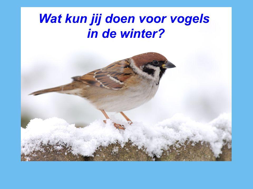 Wat kun jij doen voor vogels in de winter?