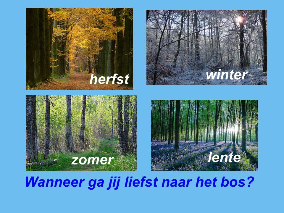 Wanneer ga jij liefst naar het bos? herfst winter lente zomer