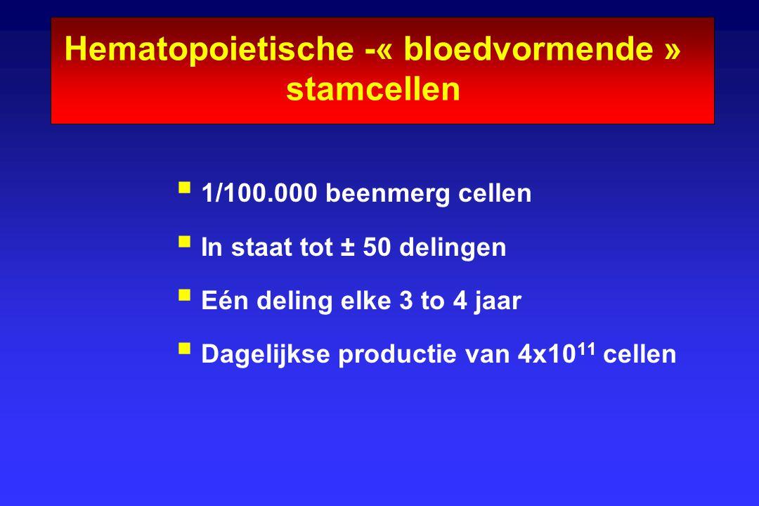 Hematopoietische -« bloedvormende » stamcellen  1/100.000 beenmerg cellen  In staat tot ± 50 delingen  Eén deling elke 3 to 4 jaar  Dagelijkse pro
