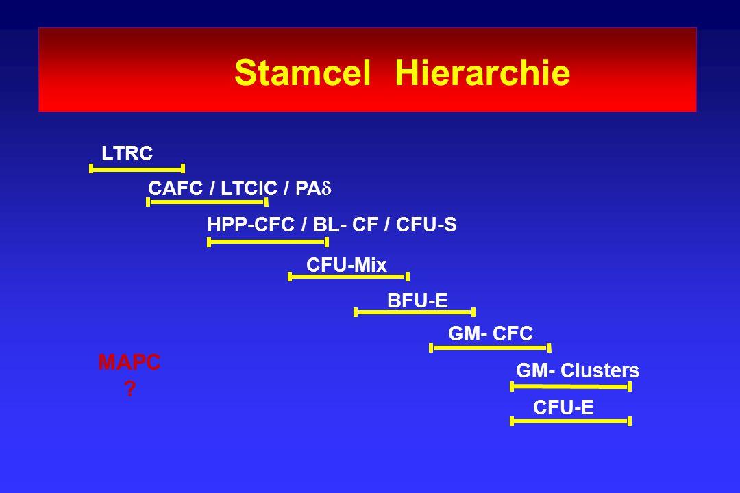 Stamcel Hierarchie LTRC CAFC / LTCIC / PA  HPP-CFC / BL- CF / CFU-S CFU-Mix BFU-E GM- CFC GM- Clusters CFU-E MAPC ?
