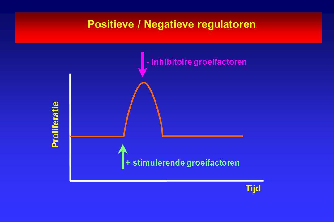 Positieve / Negatieve regulatoren - inhibitoire groeifactoren + stimulerende groeifactoren Proliferatie Tijd