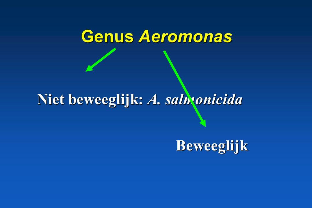 Genus Aeromonas Furunculose, vissen septicemie Niet beweeglijk: A. salmonicida