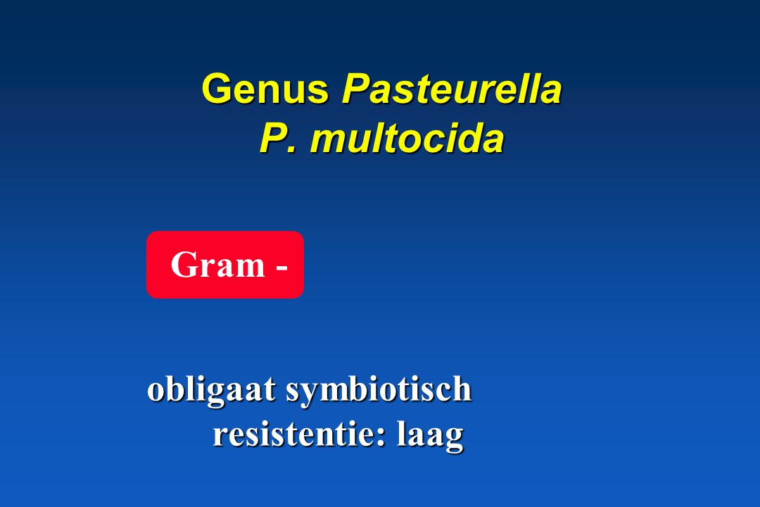 Proteobacteria GRAM NEGATIEF * Facultatief anaërobe Gr – Familie Enterobacteriaceae Familie Enterobacteriaceae Vibrio en verwante bacteriën Vibrio en verwante bacteriën Pasteurella, Mannheimia, Haemophilus, Actinobacillus Pasteurella, Mannheimia, Haemophilus, Actinobacillus