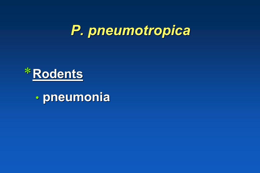 P. caballi * Horses endocarditis endocarditis pneumonia pneumonia