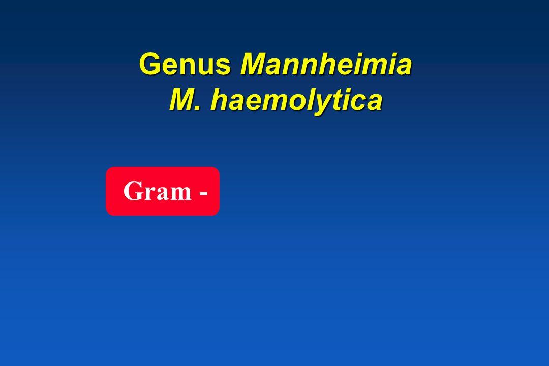 P. trehalosi * Sheep septicaemia (P. haemolytica biotypeT) septicaemia (P. haemolytica biotypeT)