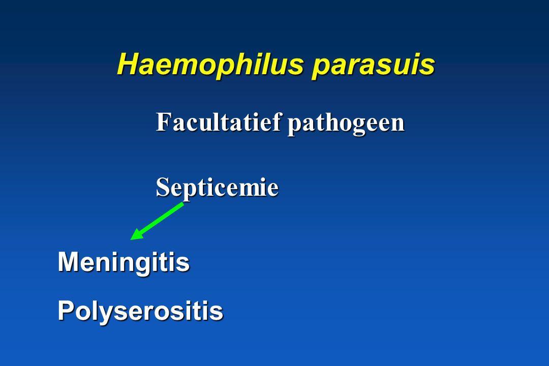 H. paragallinarum Kip: rhinitis, sinusitis