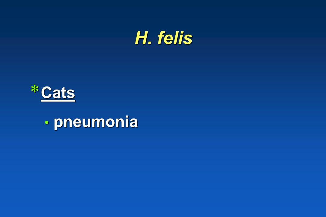 Haemophilus parasuis MeningitisPolyserositis Facultatief pathogeen Septicemie
