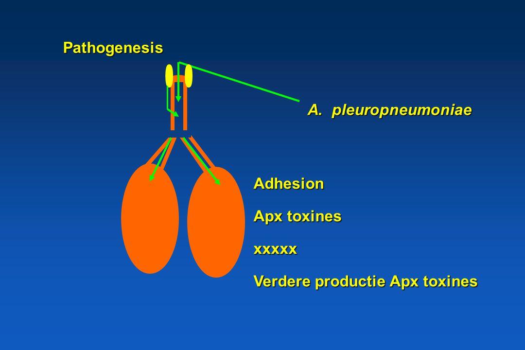 Kiemvermeerdering - ijzer noodzakelijk voor groei kiemen - ijzer in gastheer in gebonden toestand - Tfbp: in buitenste membraan van A.