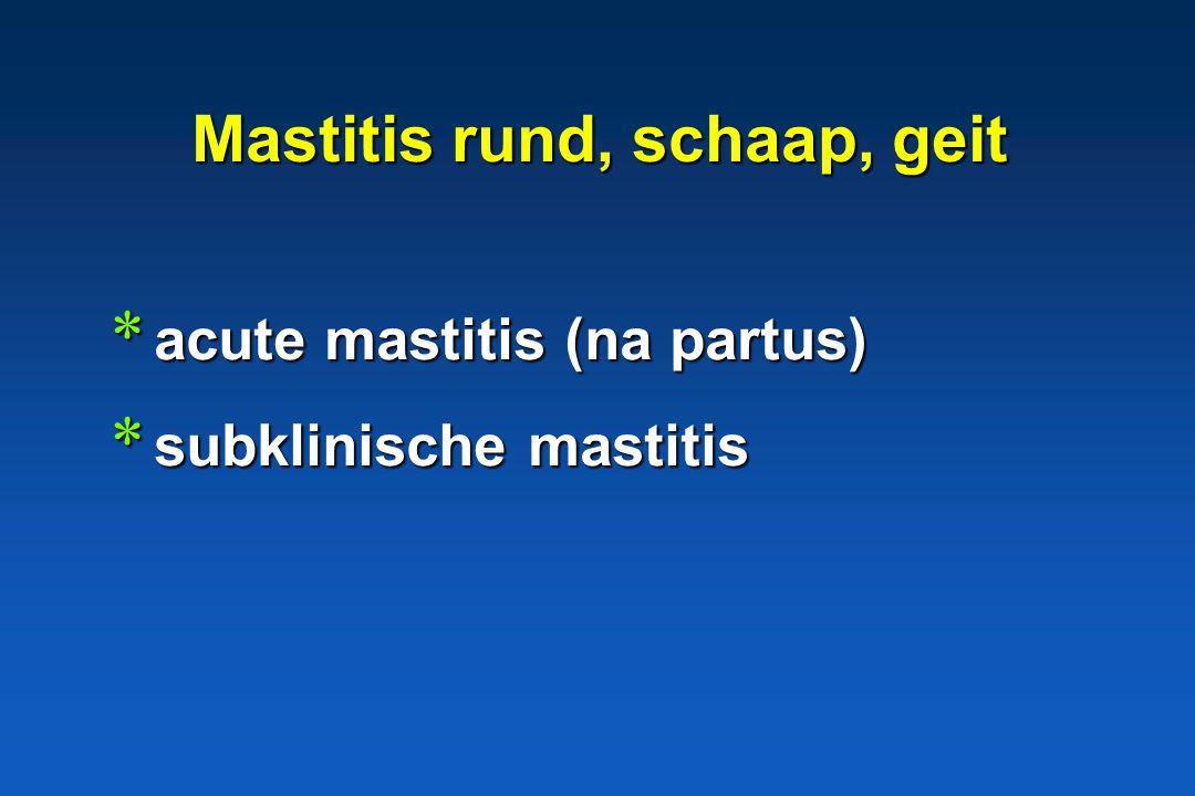 Hamster, nerts, cavia, chinchilla, (vogels) * pneumonie, septicemie