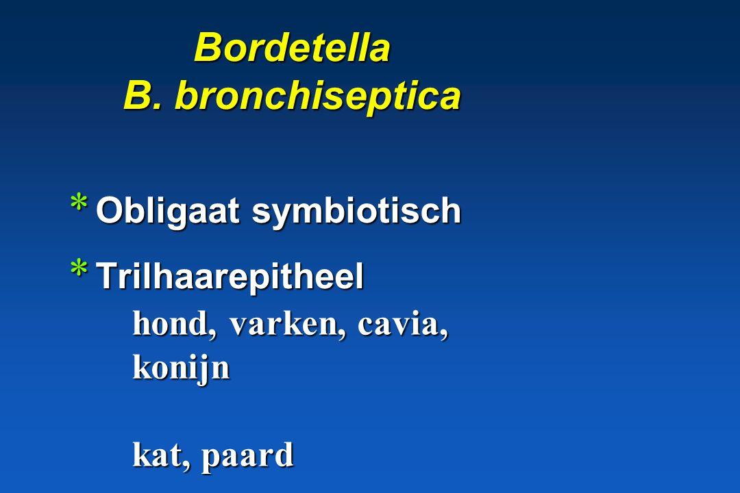 Brucella: pathogene betekenis * Vruchtbaarheidsstoornissen * Zoönosen * Wettelijk bestreden