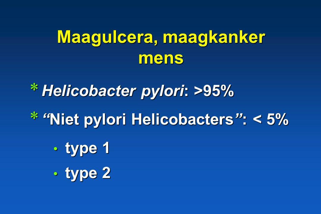 Helicobacter pathogene betekenis * Mens: maagulcera, maagkanker H. pylori (> 95%) H. pylori (> 95%)