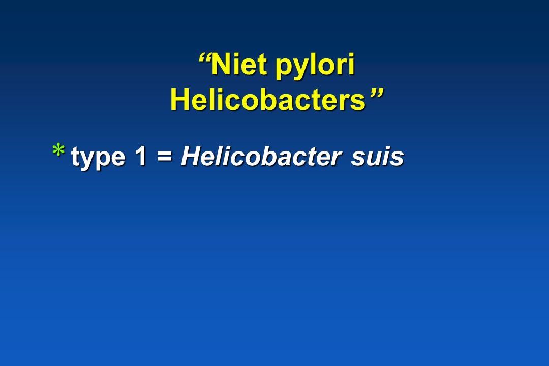 Maagulcera, maagkanker mens * Helicobacter pylori: >95% * Niet pylori Helicobacters : < 5% type 1 type 1 type 2 type 2