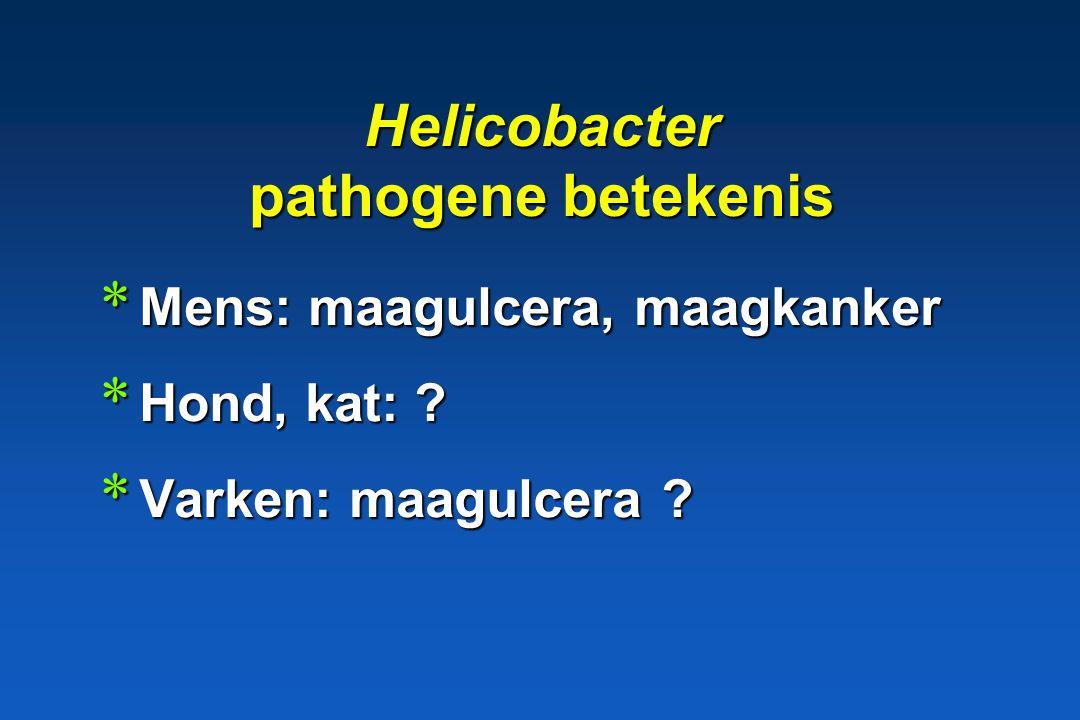 Niet pylori Helicobacters * type 2 = H.bizzozeronii H.