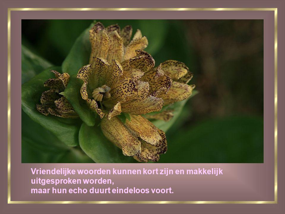Vriendschap is als een klavertje vier het is zeldzaam en brengt geluk.